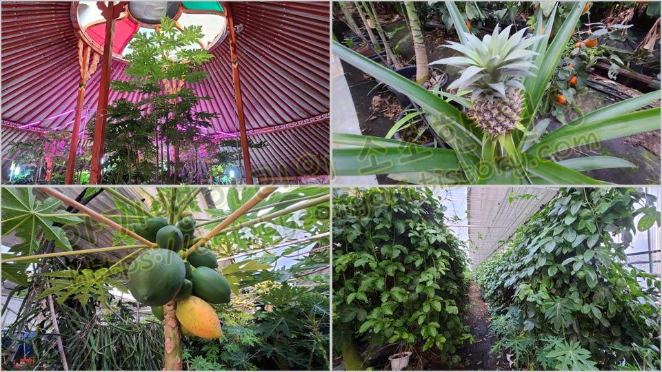 열대과일농장체험