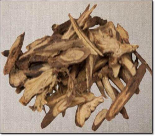 호장근 뿌리
