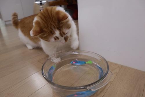 고양이로봇장난감