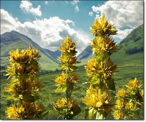 루테인함유 꽃