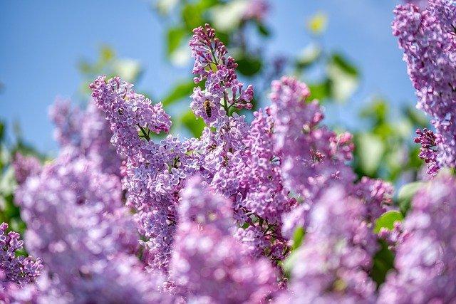 봄 여름 정원을위한 13 가지 꽃