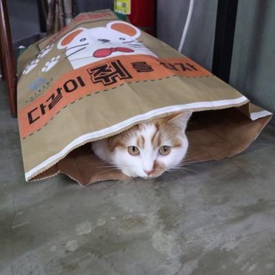 고양이종이포대