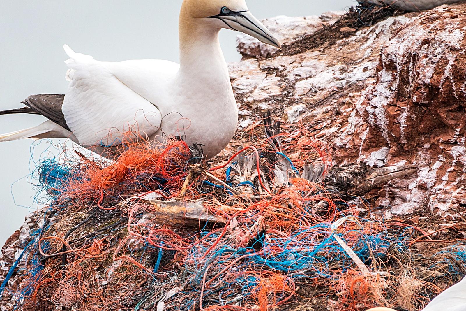 조류 서식지의 어망 쓰레기