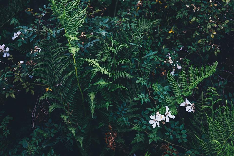 숲-제주도-감성사진