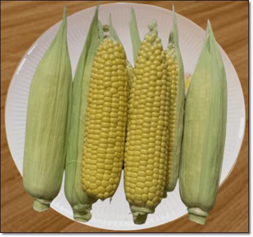 초당 옥수수