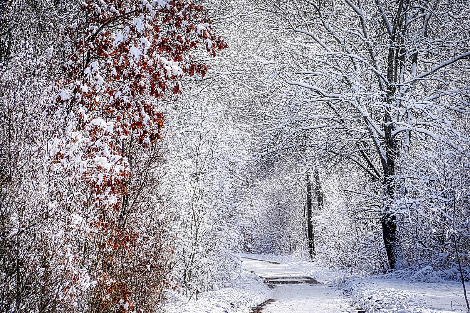 겨울 눈 숲길