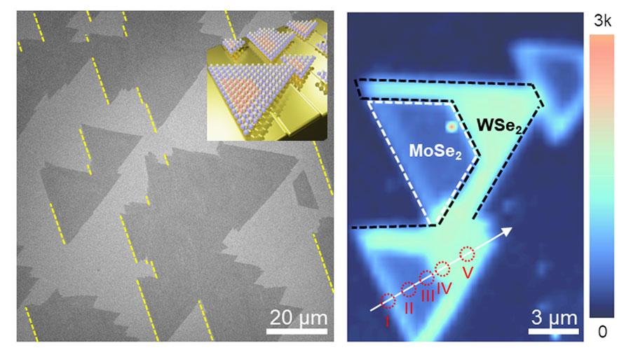 ▲ 합성된 MoSe2/WSe2 이종접합구조의 전자현미경 이미지 및 WSe2 라만 세기 맵핑 이미지