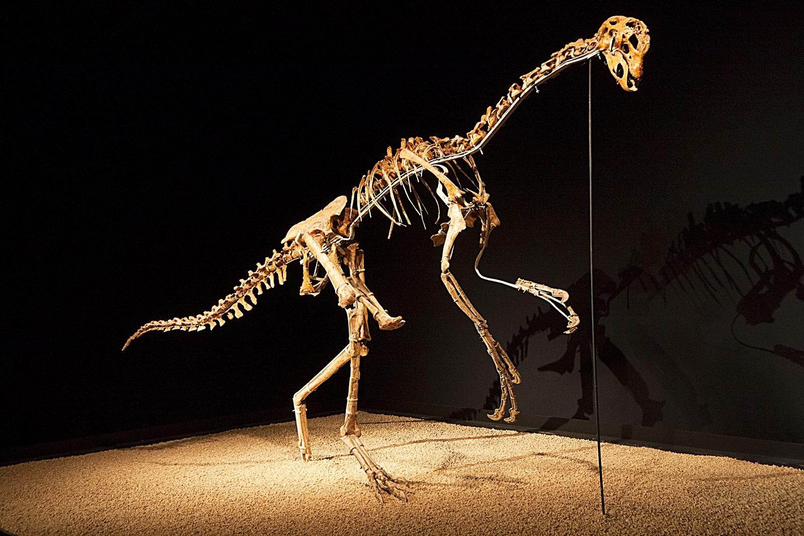 키티파피 공룡 뼈 화석