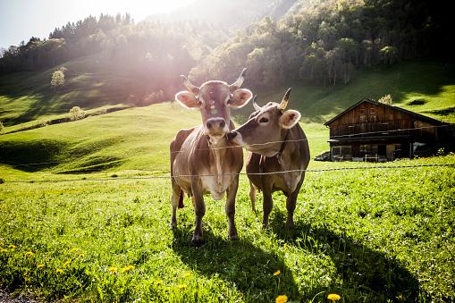 스위스 농축업