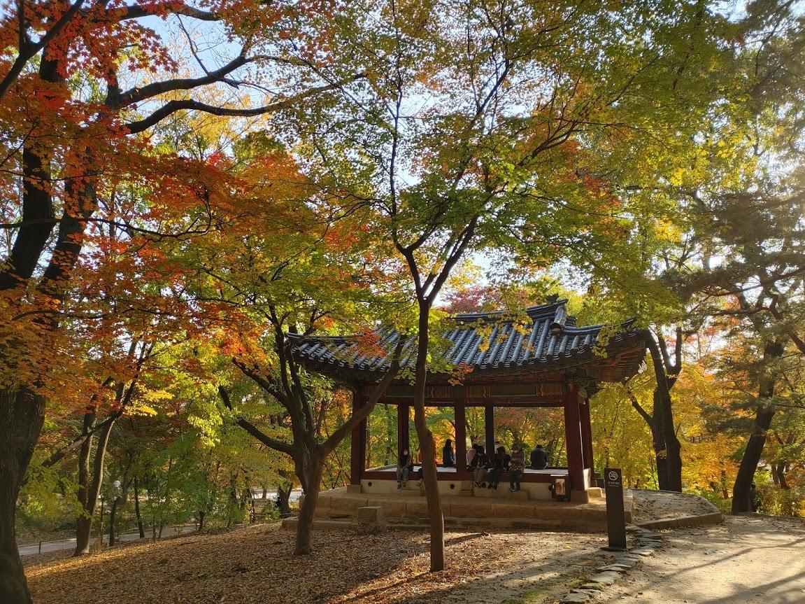 서울 단풍 명소 4대 고궁 중 가성비 좋은 창경궁