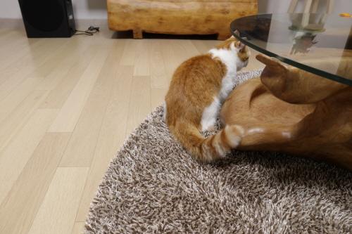 고양이가심심할때