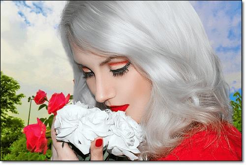 흰장미 여자