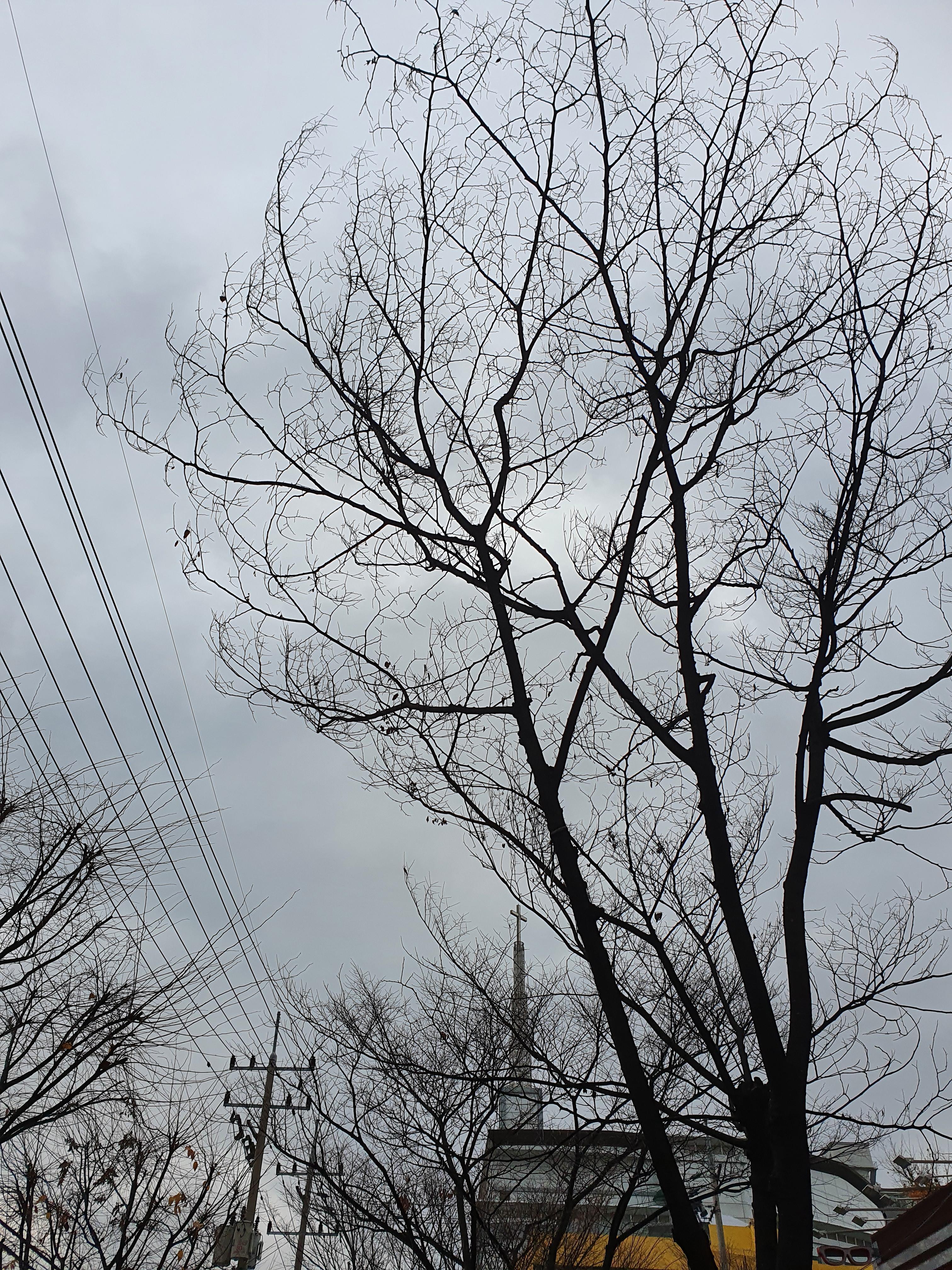 회색빛 겨울이 되다