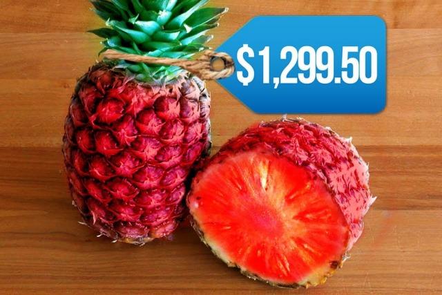 비싼 과일, 유바리 멜론, 매일꿀정보