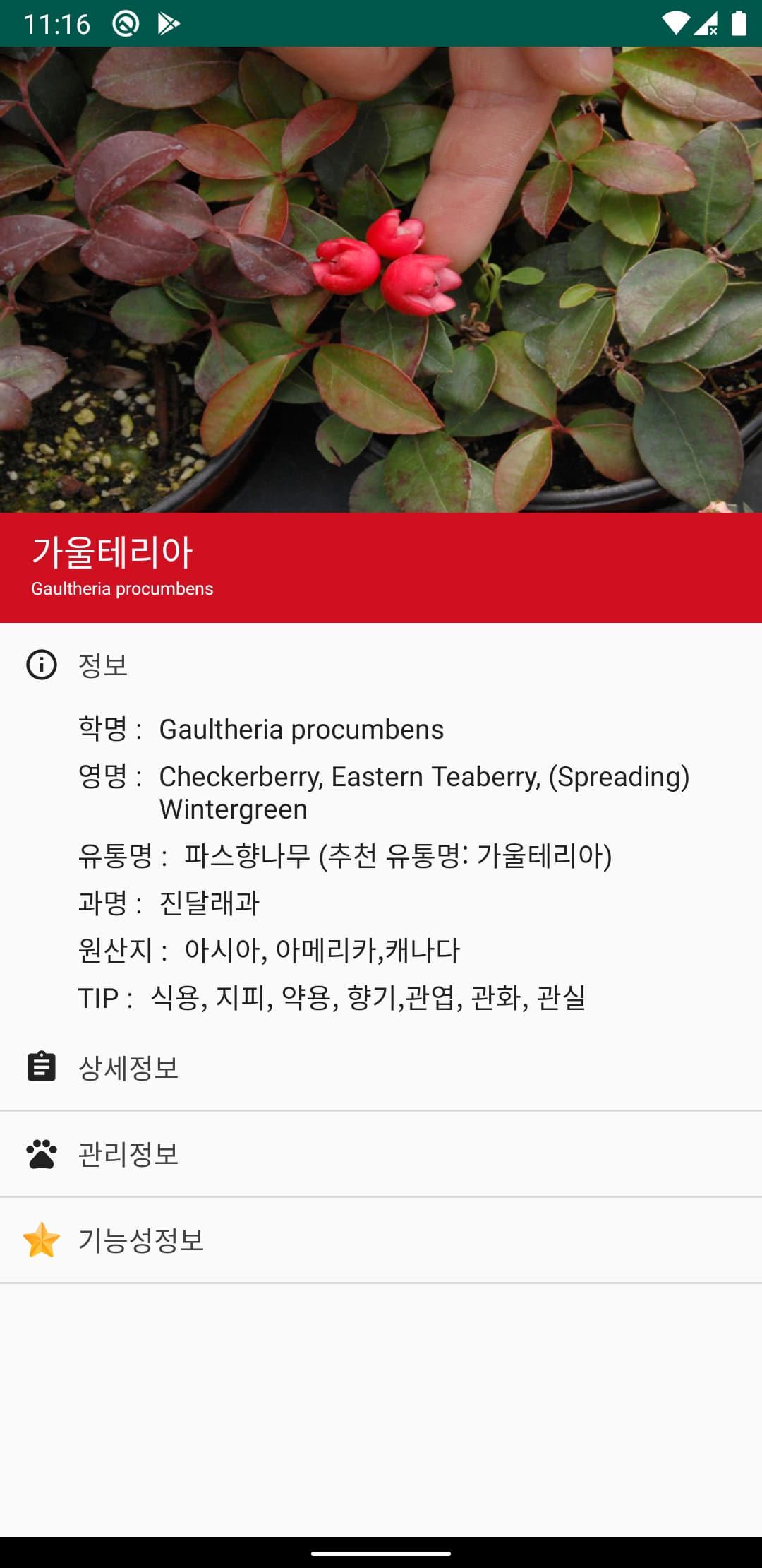 식물 정보 화면