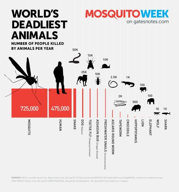 세계에서-가장-치명적인-동물