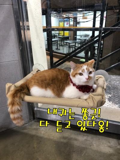 귀여운고양이