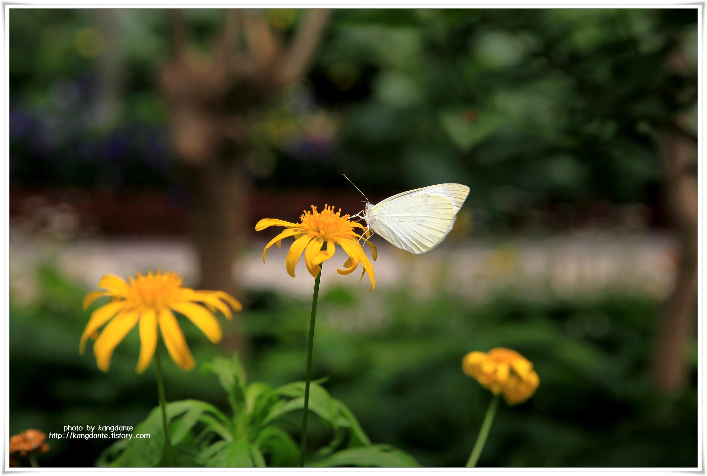 서울숲 나비정원의 꽃과 나비