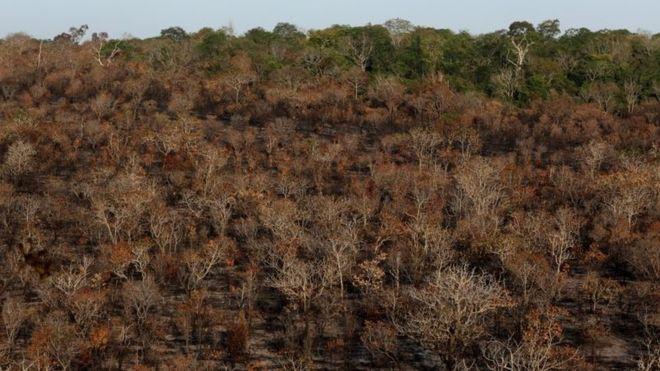 브라질 보우소나루 정부, 아마존 의용소방대원 방화혐의 체포…눈엣가시 시민단체 때리기 나섰나