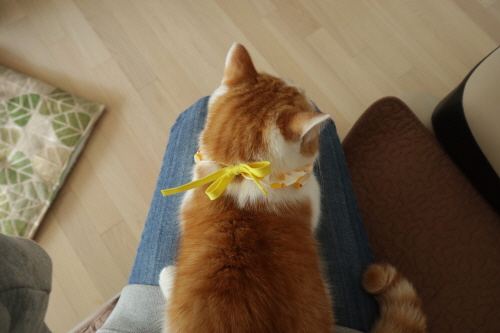 고양이케이프