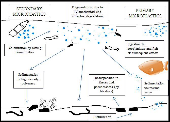 바닷속 미세 플라스틱 생성과 이동 과정