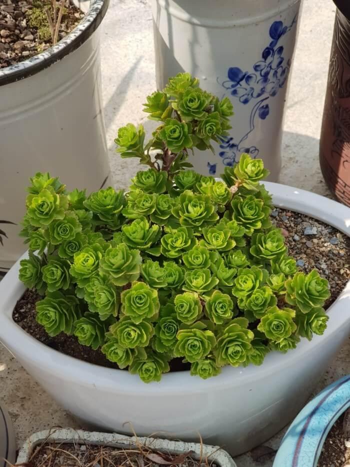 다육식물은 온도관리에만 신경써주면 매력적인 식물이다.