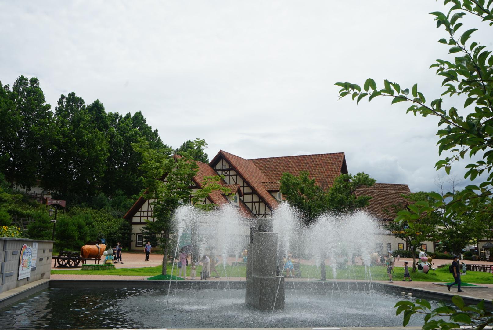 안성 팜랜드 연꽃이 핀 연못