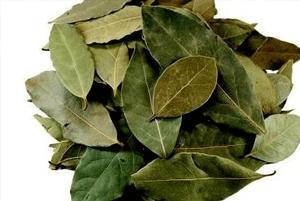 월계수잎효능2