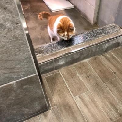 고양이화장실