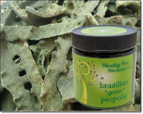 브라질그린프로폴리스 유래