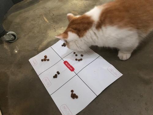 고양이사료테스트