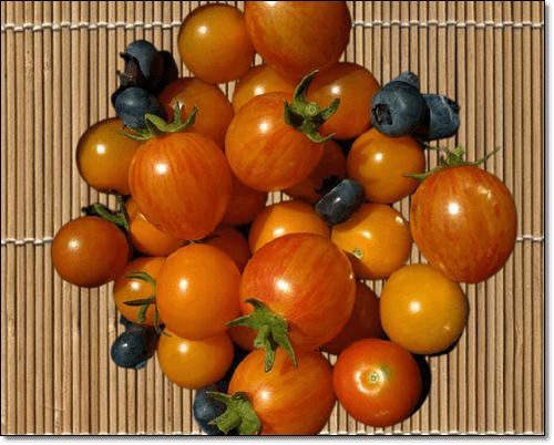 리코펜음식 토마토
