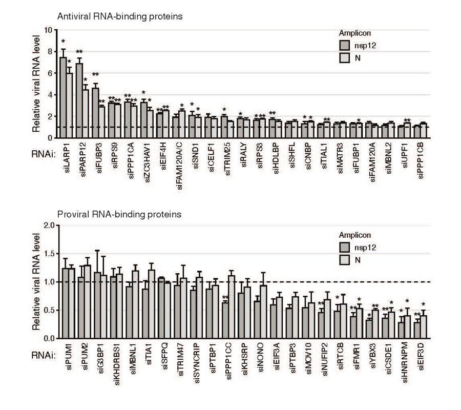 ▲ 사스코로나바이러스-2에 직접 결합하는 각각의 단백질들이 바이러스 증식에 미치는 영향을 평가한 실험적 결과