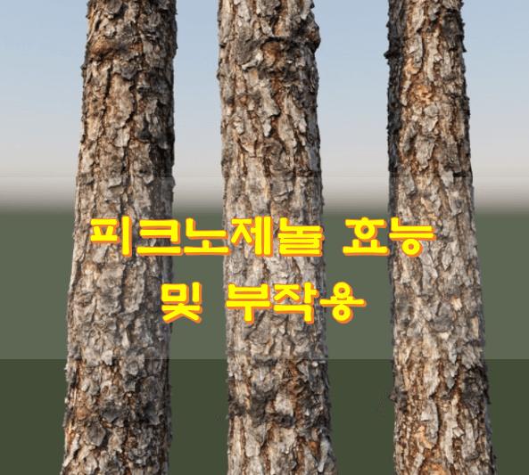 소나무-세그루-사진