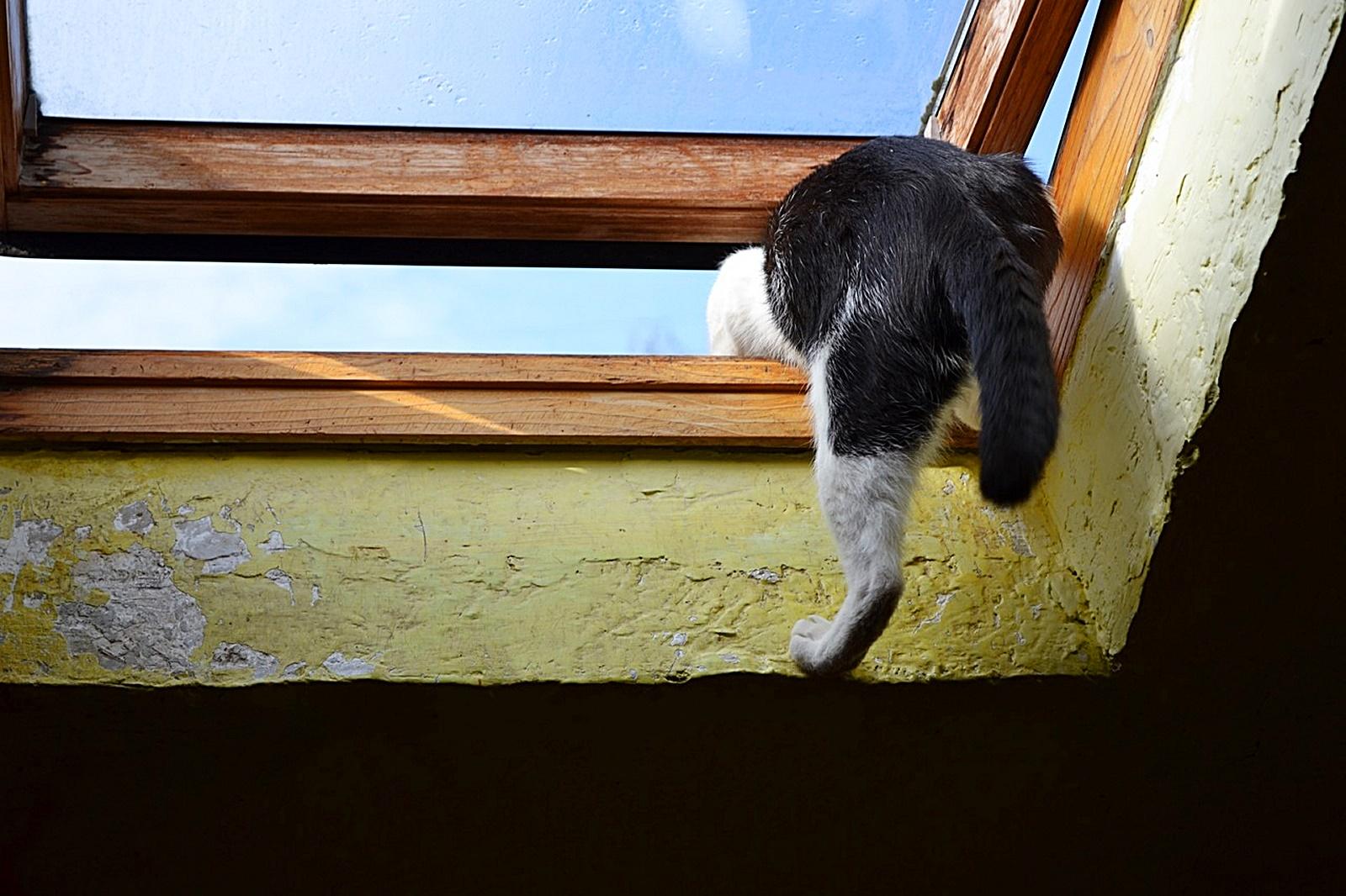 몰래 나가는 고양이