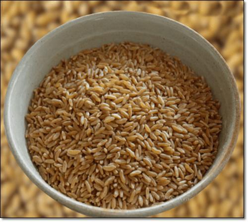 카무트 쌀