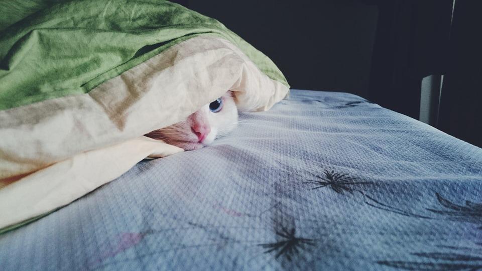 이불 침대 이부자리 잠자리