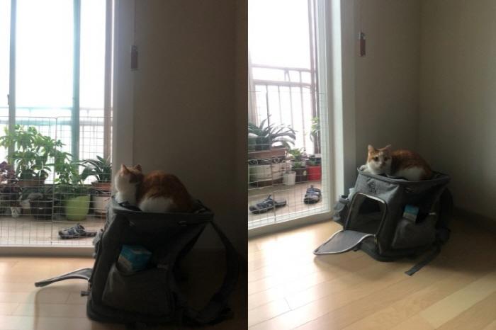 고양이가방