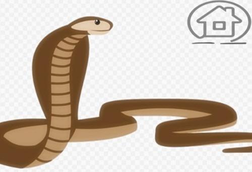 뱀띠 운세