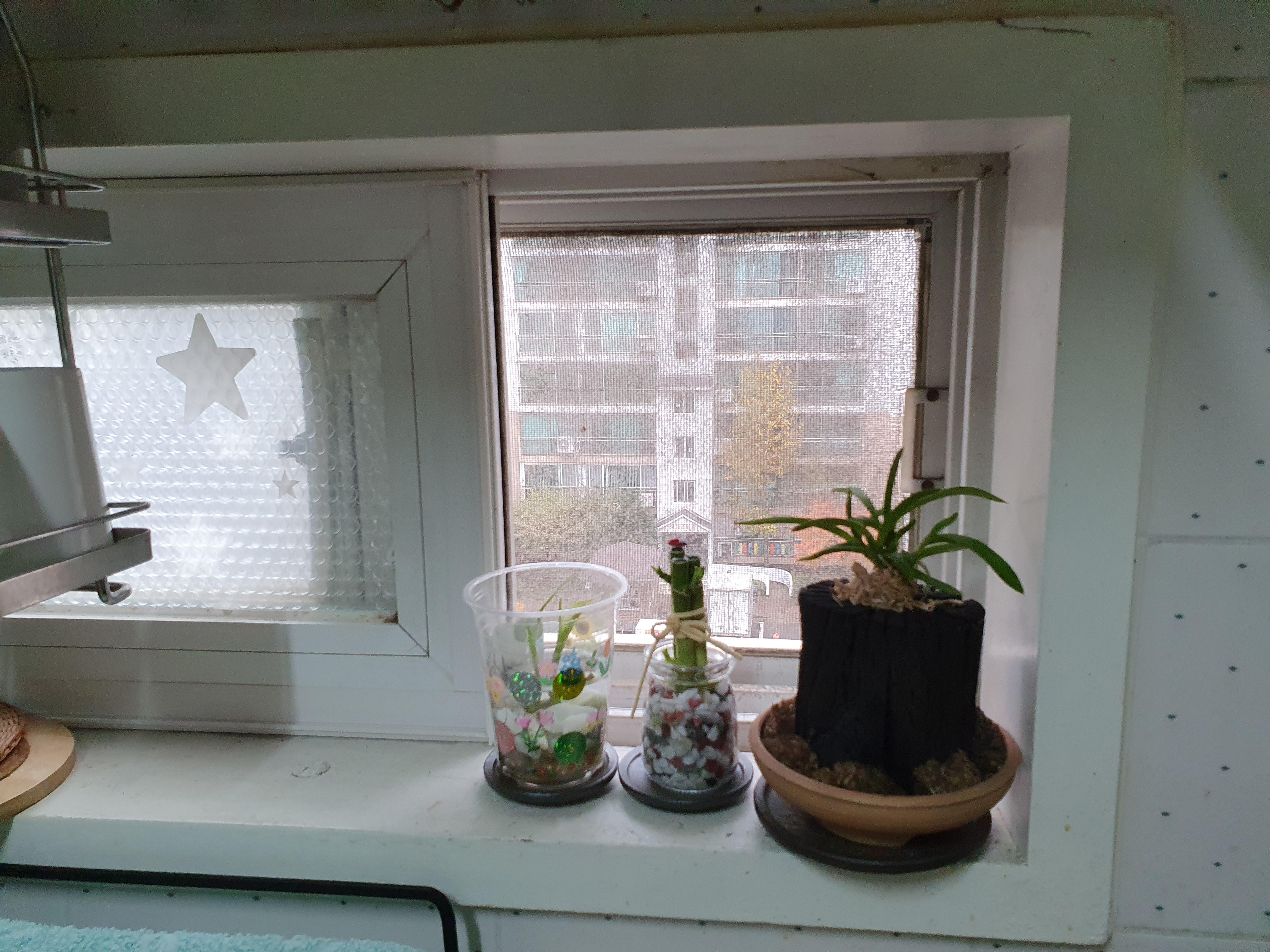 부엌 창가에 개운죽을 하나 더 놓다
