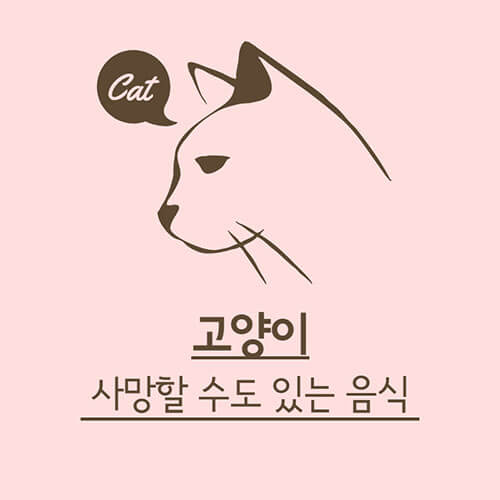 고양이-먹이-종류-썸네일
