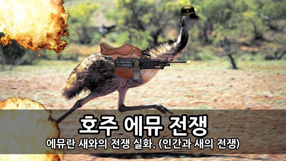 호주 에뮤 전쟁 - 에뮤란 새와의 전쟁 실화. (인간과 새의 전쟁)