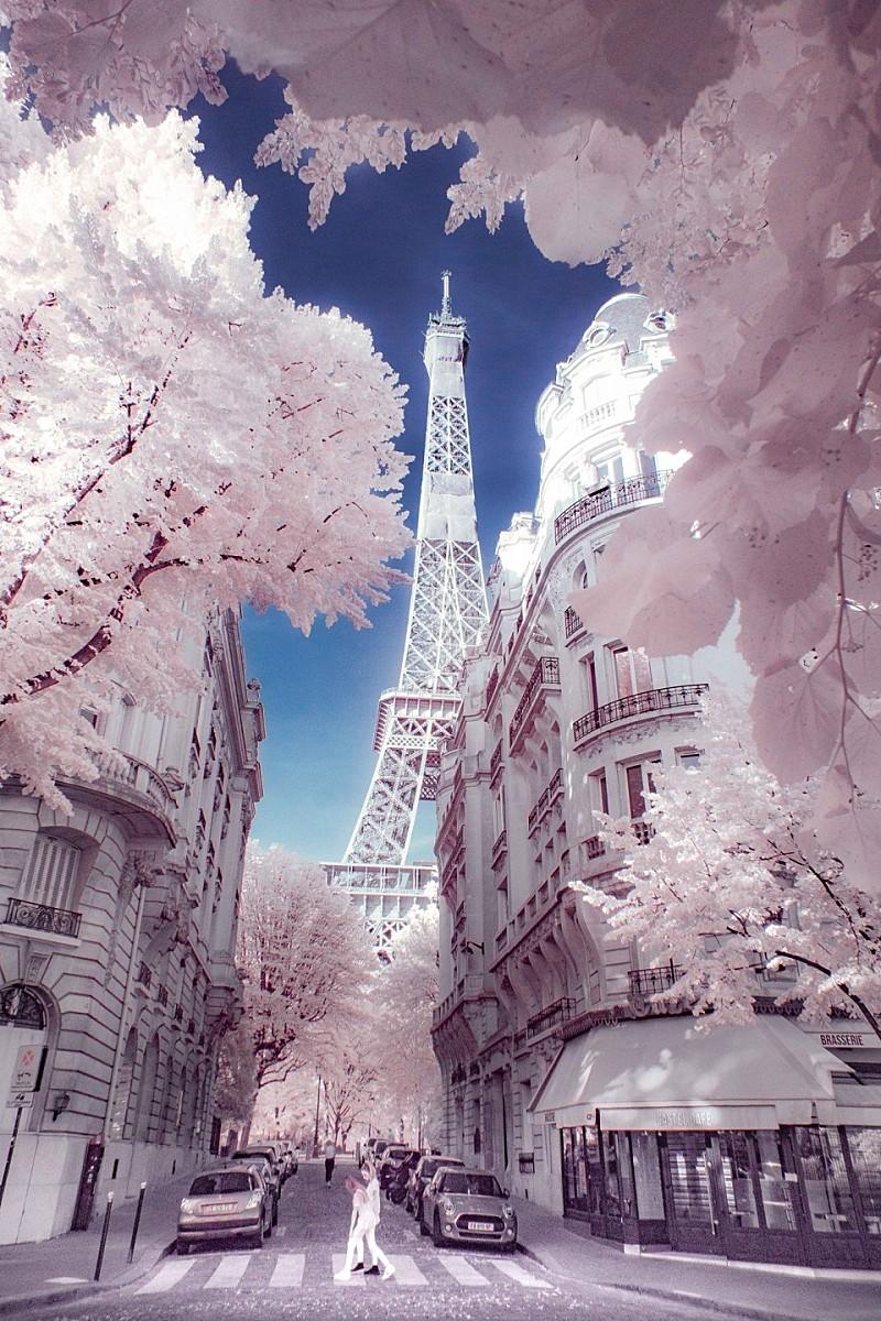 프랑스 파리 : 며칠전 에펠탑, 몽환적인 나뭇잎 사이로