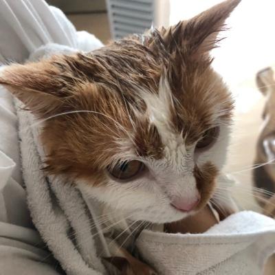 고양이목욕
