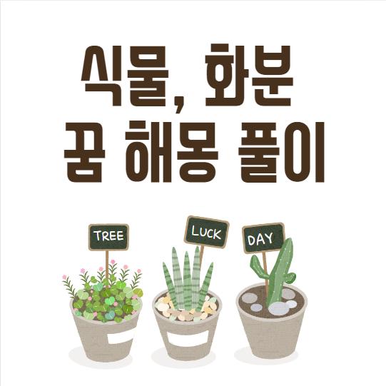 식물, 화분 꿈 해몽