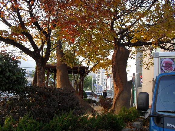 창원시 마산 회원1지구 재개발지역 이야기 - 9