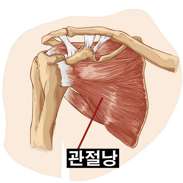 어깨관절-회전근-구조