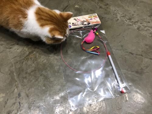 다이소고양이장난감