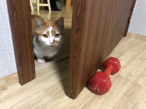 고양이당근