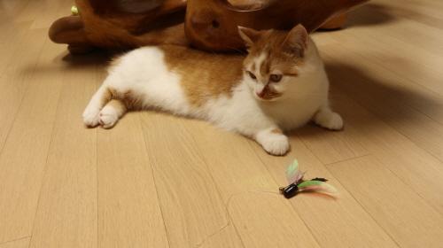 고양이사냥놀이